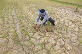 Presque la totalité des localités touchées par la sécheresse