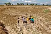 El Nino a faili, mais la sécheresse perdure au Vietnam