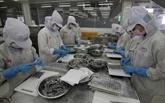 Hausse des exportations de crevettes aux États-Unis