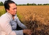 Aide financière en faveur des victimes de la sécheresse et de la salinisation