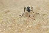 Environ 500 millions de personnes pourraient contracter le virus Zika dans les Amériques