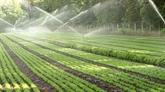 Ninh Thuân bénéficie d'une technologie d'irrigation moderne