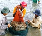 Crevettes : le Vietnam et les États-Unis signent un accord antidumping