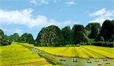 La bande-annonce officielle de Kong : Skull Island révèle des paysages imposants du Vietnam