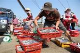 Un plan d'aide des travailleurs affectés par l'hécatombe de poissons
