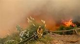 Les incendies à Madère font trois morts, 1.000 personnes sont évacuées