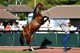 France : une poulichepur-sang vendu 1,4 million d'euros à Deauville
