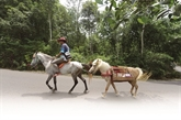 Le «biblio-cheval» de Ridwan, des livres pour régions isolées d'Indonésie