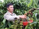 Le café vietnamien présenté sur le marché britannique