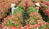 L'exode des fleurs de Hanoï