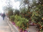 Les marchés aux fleurs du Têt