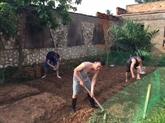 Cultiver les légumes dans le désert africain