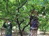 Cân Tho travaille avec le Japon sur une plantation modèle