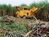 Développement des bioénergies à base de bagasse : une opportunité pour les investisseurs
