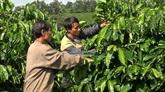 Gia Lai met le cap sur une agriculture durable