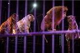 L'Irlande interdit l'emploi d'animaux sauvages dans les cirques