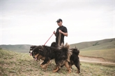 Le bouvier mongol, un chien ressuscité du fond des âges