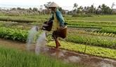Publication d'un rapport sur les ménages ruraux au Vietnam