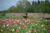 Afghanistan : les Américains ciblent des laboratoires d'héroïne