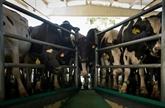 Espagne : un cas de vache folle détecté dans le Nord-Ouest
