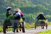 L'IFAD évalue la mise en œuvre du projet ADM à Trà Vinh
