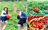 L'agritourisme séduit de plus en plus de visiteurs à Dà Lat