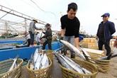 De plus en plus d'entreprises disent non à la pêche illicite