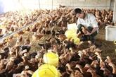 Bon bilan du programme d'aides onusiennes à l'instauration de la Nouvelle ruralité