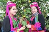 La 2e fête du camélia aux fleurs jaunes 2018 prévue début janvier à Quang Ninh