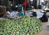Les États-Unis ouvrent leurs portes aux mangues vietnamiennes