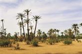 Marrakech, une ville au rythme du développement durable