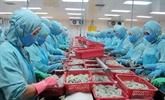 Les exportations de crevettes devraient atteindre 3,4 milliards de dollars en 2017