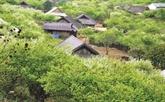 Tây Bac, une mine d'or à exploiter