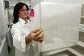 À l'Institut Pasteur, on plonge dans l'univers du moustique pour mieux le combattre