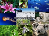 L'ambassade de France au Vietnam célèbre la biodiversité