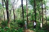 Gardiens bénévoles d'une «forêt parfumée»