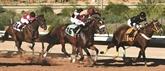 Avec pur-sang mais sans paris, les courses de chevaux captivent l'Arabie