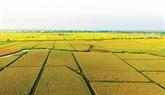 Le Vietnam cherche à stimuler les investissements dans l'agriculture