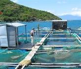 Le Vietnam prône le développement de l'élevage piscicole en mer