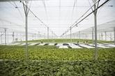 IFC soutient la production agricole durable
