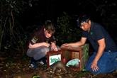 Cinquante-trois pangolins relâchés dans la nature