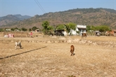 Cân Tho intensifie les capacités de résilience aux changements climatiques