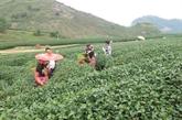 Son La accueillera l'échange culturel frontalier entre le Vietnam et le Laos