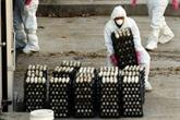 Grippe aviaire : nouvelle flambée en République de Corée