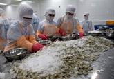 Des chaînes de production de crevettes sûres au service des exportations