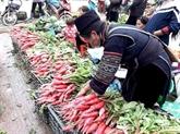 Originalité du marché des radis rouges à Sa Pa