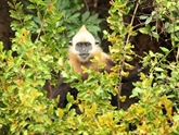 Intensification de la préservation des espèces de primates d'ici 2025