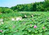Dông Thap est prêt pour la Fête des fleurs de lotus