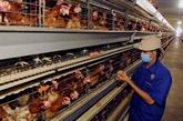 Résultats encourageant de la restructuration agricole de Phu Tho