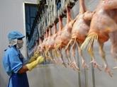 Premier lot de poulet vietnamien exporté vers le Japon en septembre